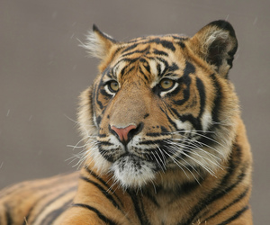 carnivore, portrait, and predator image