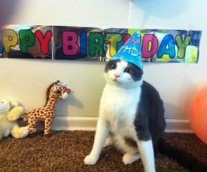 cat and happy birthday image