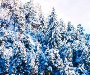 christmas, snow, and winter wonderland image
