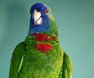 parrot, dominica, and nature island image