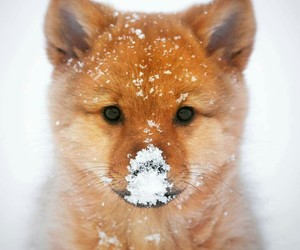 snow, cute, and winter image