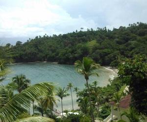 nature, sea, and tree image