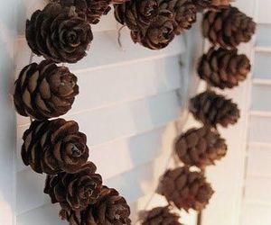pinecone and pinecones image