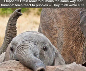 elephant, animal, and puppy image