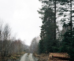 forest, grey, and wales image
