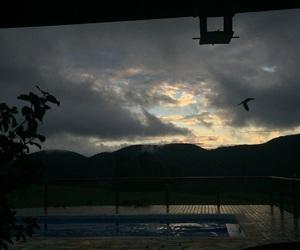 bird, brasil, and MG image