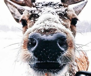 aesthetic, animals, and snow image