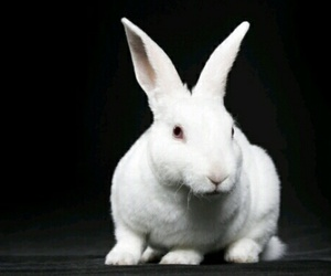bunny, rabbit, and white image
