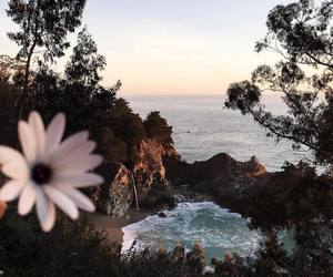 nature, flowers, and travel image