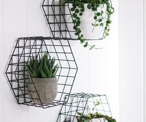 plants, home, and decoration image