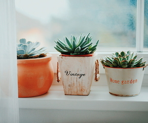 plants, vintage, and cactus image
