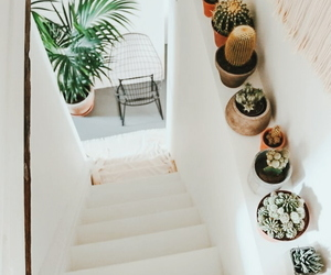 interior, cactus, and home image