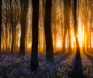 beautiful world, wildflower, and bluebells image