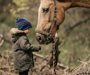 animals, children, and country living image