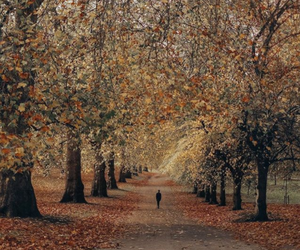autumn, green park, and london image