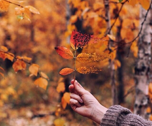 autumn, aesthetic, and awesome image