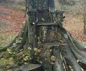 a tree trunk throne image