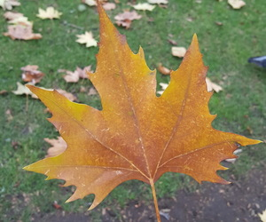 autumn, holiday, and leaf image