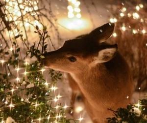 christmas, deer, and light image
