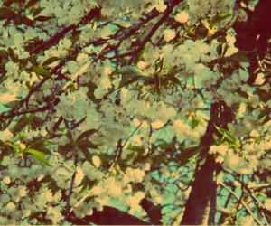 blossom, brown, and edit image