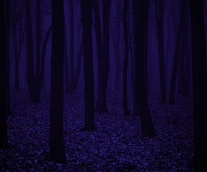 Darkness, forest, and glow image