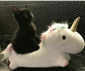 cat, unicorn, and cute image