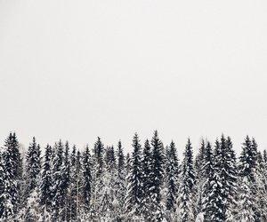 christmas, holidays, and nature image