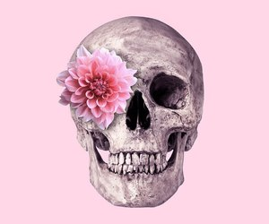 pink, flowers, and skull image