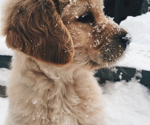 dog, snow, and puppy image