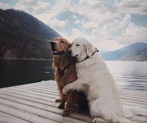 animals, puppy, and sea image