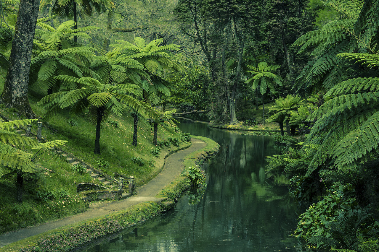 jungle, forest, and green image