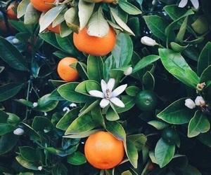 orange, flowers, and nature image