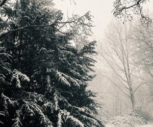beautiful, forest, and snow image