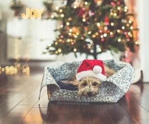 adorable, christmas, and cozy image