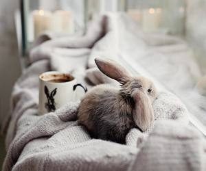 bunny, easter, and rabbit image