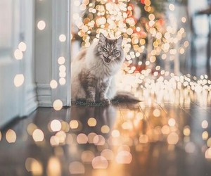 cat, lights, and pets image