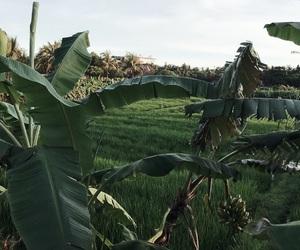 bali, earth, and garden image