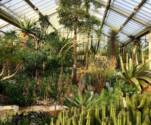 greenhouse, kew gardens, and nature image