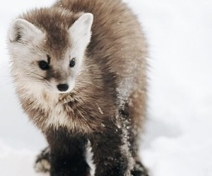 animal, movie, and snow image
