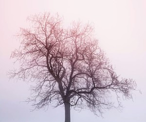 tree, snow, and photography image