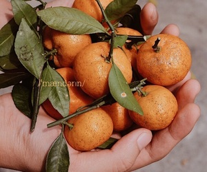 hand, mandarin, and orange image