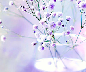 flowers, happiness, and purple image