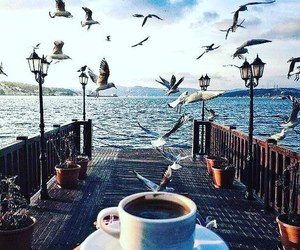 coffee, bird, and sea image