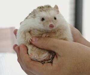 animals, hedgehog, and wildlife image