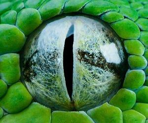 animal and eye image