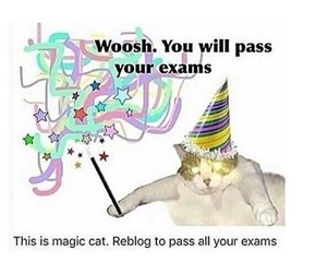 cat, exams, and good luck image