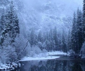 christmas, forest, and frozen image