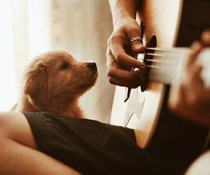 guitar, dog, and music image
