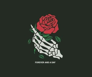 rose, black, and dark image