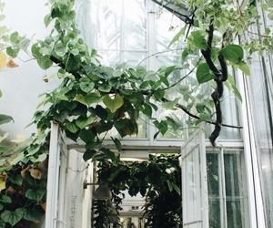 beautiful, botanical garden, and cozy image